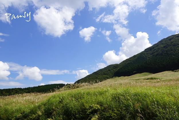 仙石原すすき草原・・1