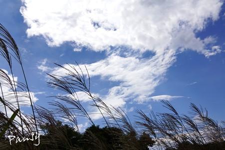仙石原すすき草原・・12