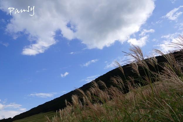 仙石原すすき草原・・14