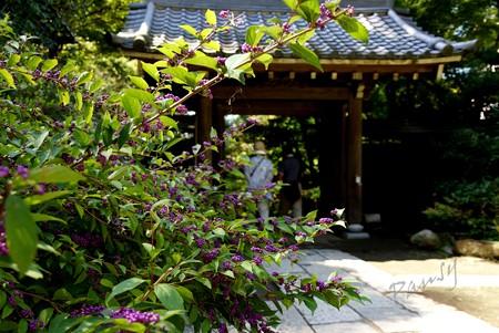 神無月の円覚寺 30