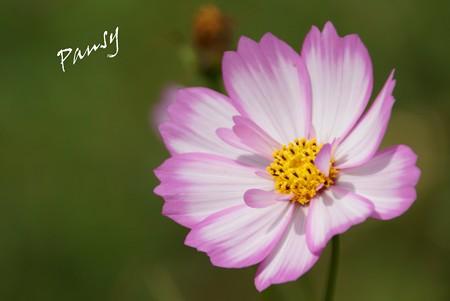 久里浜 花のくに 068
