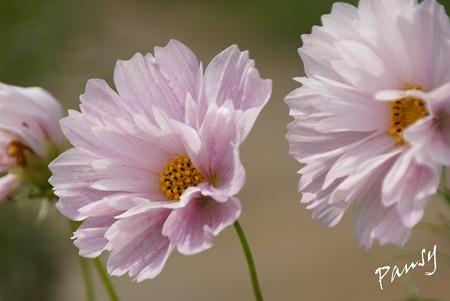 久里浜 花のくに 120