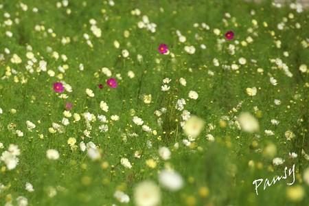 久里浜 花のくに 144