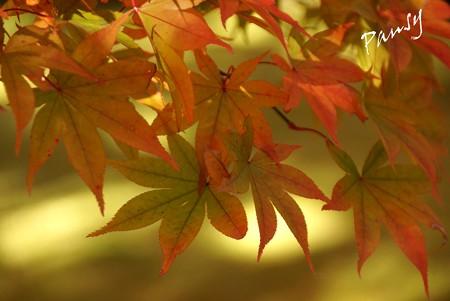 箱根の紅葉 149