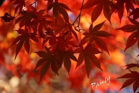 箱根の紅葉 155