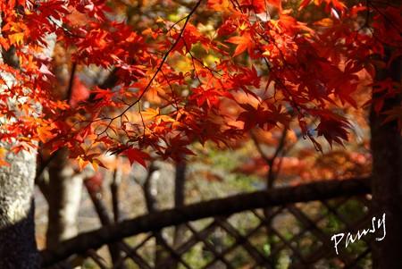 箱根の紅葉 157