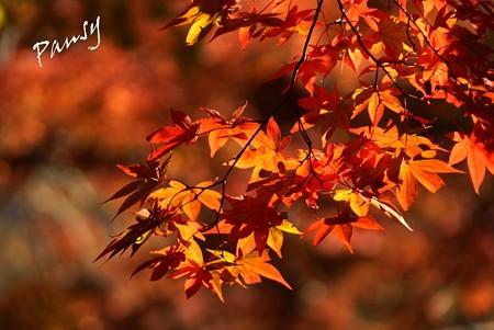 箱根の紅葉 151