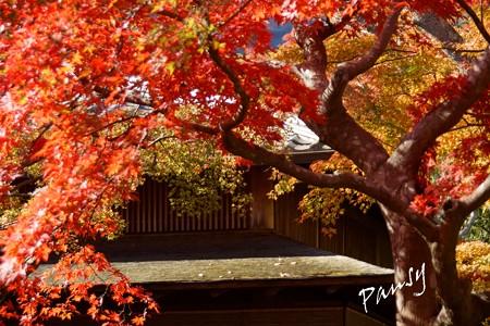 箱根の紅葉 168