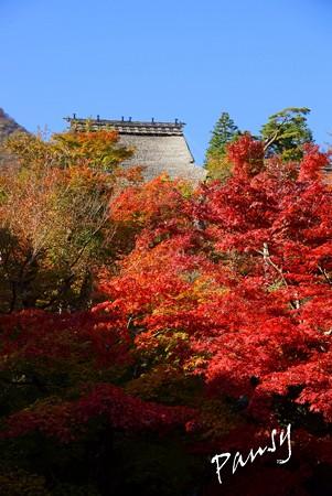 箱根の紅葉 172