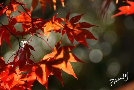 箱根の紅葉 186