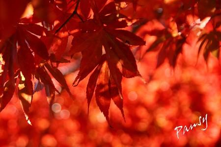 箱根の紅葉 190