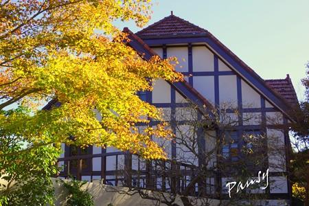 箱根の紅葉 358