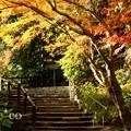 写真: 鎌倉 160