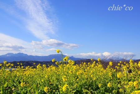 空と・・雲と・・菜の花と・・