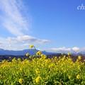 写真: 空と・・雲と・・菜の花と・・