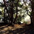 写真: 吾妻山公園 024
