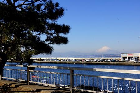 江の島 さんぽ~1