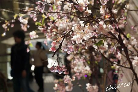 クリスタルの桜彩..11