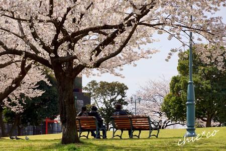 桜 Yokohama 050