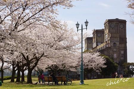 桜 Yokohama 051