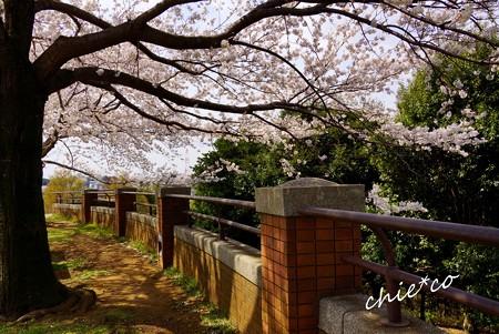 桜 Yokohama 071