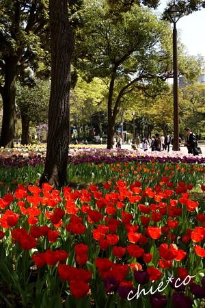 横浜公園 072