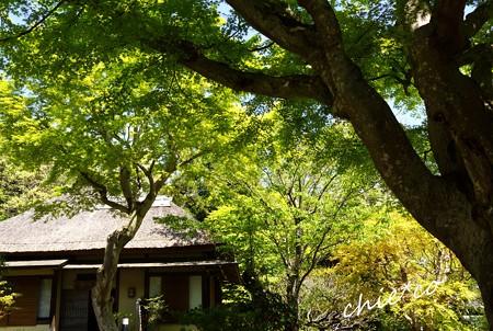 北鎌倉 127