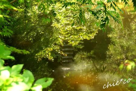 池に映る緑・・
