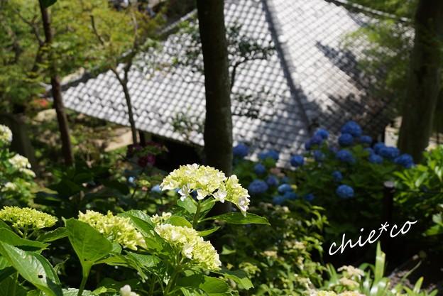 鎌倉 長谷寺 059