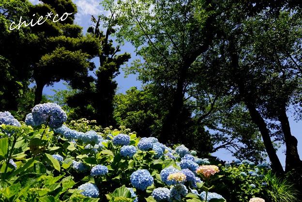 鎌倉 長谷寺 125