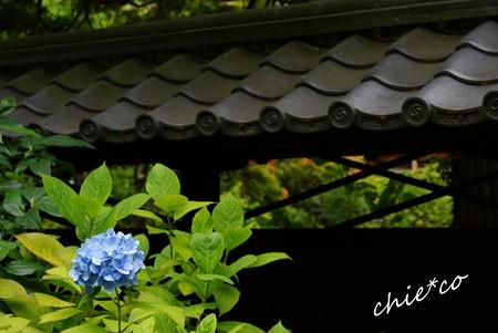 北鎌倉~水無月 322