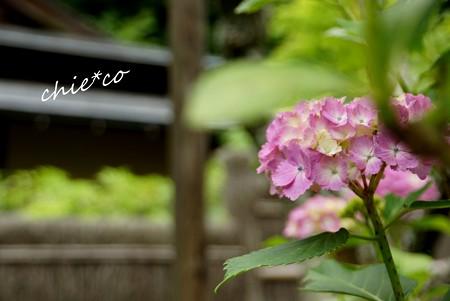 北鎌倉~水無月 323