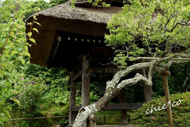 北鎌倉~水無月 395