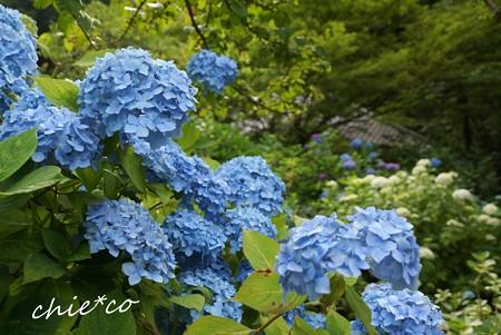 北鎌倉~水無月 047