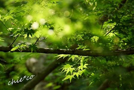 北鎌倉~水無月 147