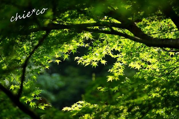 北鎌倉~水無月 153