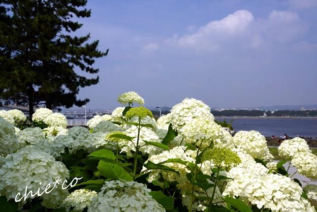 八景島 035