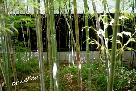 葉月の三渓園 214