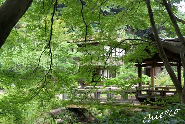 葉月の三渓園 236