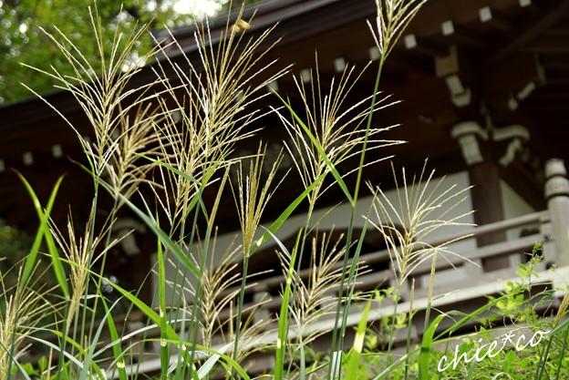 北鎌倉 086