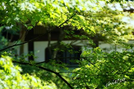 鎌倉長谷 076