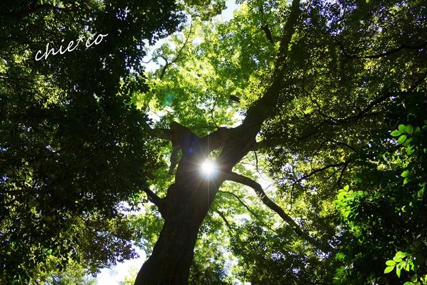 大樹より清らかな光・・