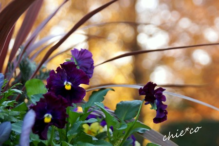 イタリア山庭園-227