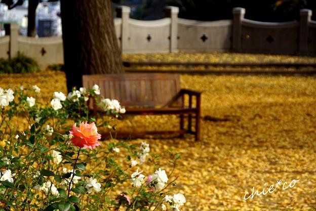 イタリア山庭園-070