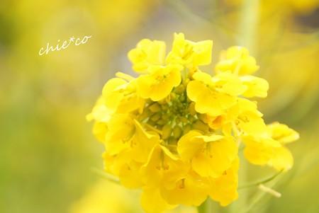吾妻山公園-001