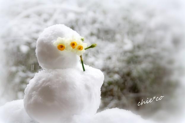 雪の日・・-006