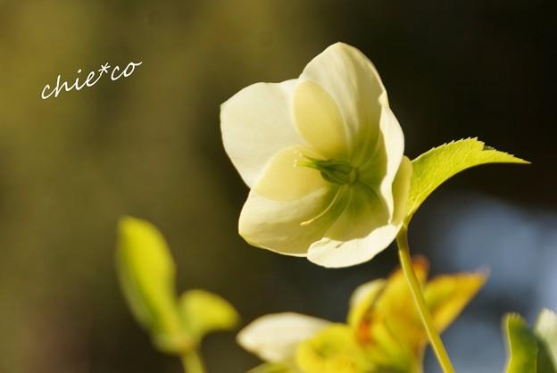 botanical garden-018