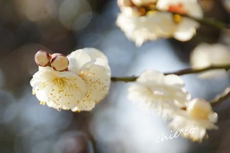botanical garden-075