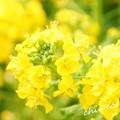 写真: botanical garden-263