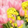 写真: botanical garden-269